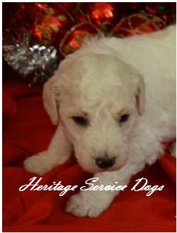 Heritage Service Dogs