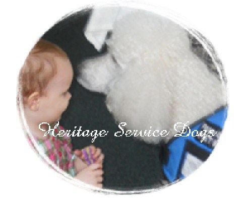 Service Dogs For Sale Illinois