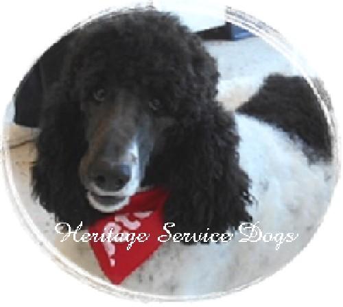 Oregon Law Regarding Service Dogs