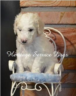 Ptsd Service Dog Training Oklahoma